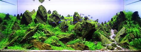 image gallery mountain aquascape