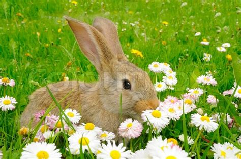 cute rabbit in the garden with flowers stock photo