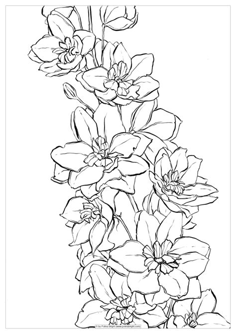 coloring book for watercolor set of watercolor coloring pages polina bright