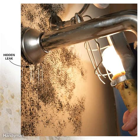 How To Test Plumbing For Leaks by 10 Tips For Removing Mold And Mildew The Family Handyman