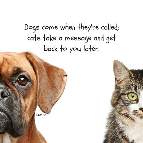 cats  dogs quotes  funny sayings   beloved pets