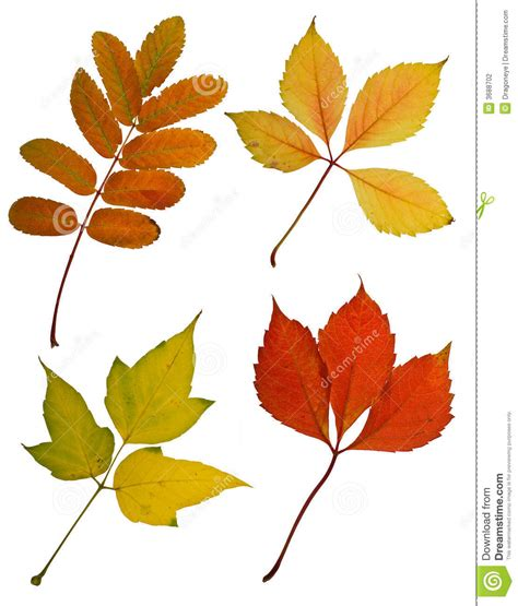the do cut and color autumn leaves cutout stock photo image of green leaves