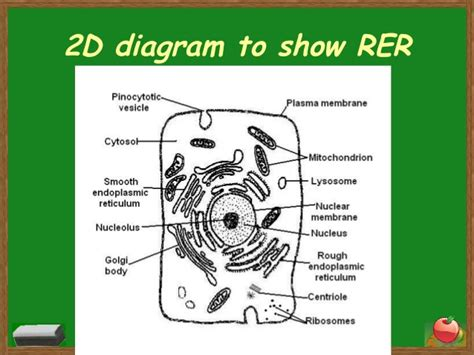 2d diagram of plant cell cells