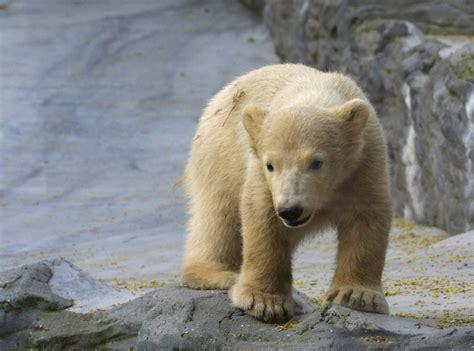 fotos animales zoo animales del zoo imagui