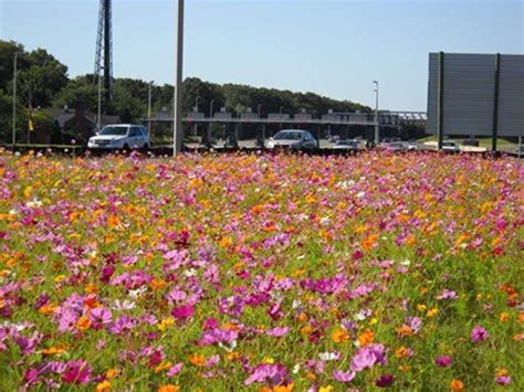 Garden State Parkway Today by Garden State Parkway Wildflower Seeds Now Available In New