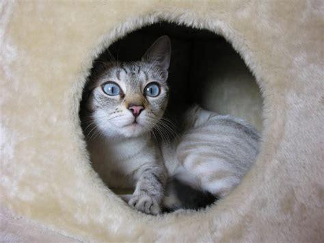 berta tiene un gatito c 243 mo saber si un gatito tiene fr 237 o
