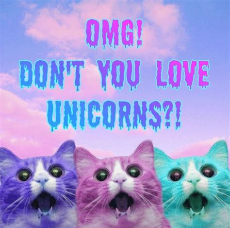 wallpaper cat unicorn unicor on tumblr