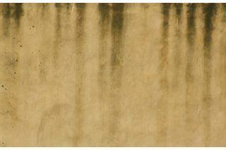 black spots   wooden floors water  child