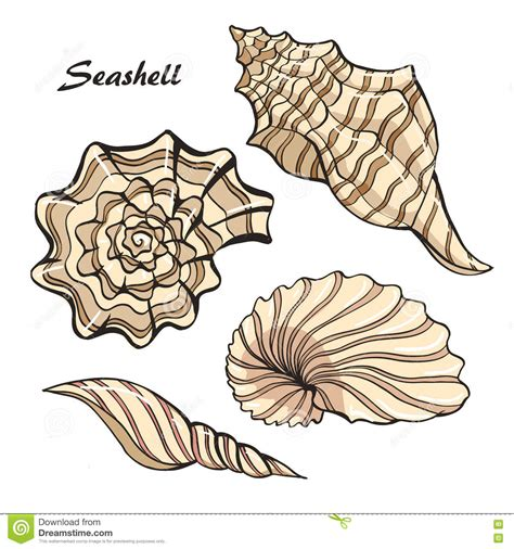 seashell color seashell color set stock vector image 72829081