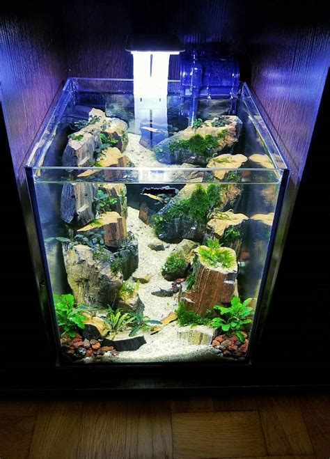 easy  build  aquarium  pics izismilecom