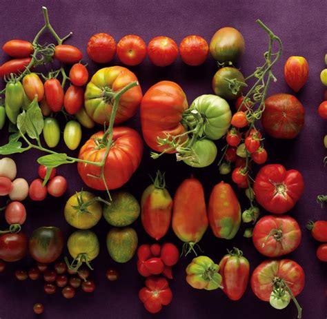 Tomaten Resistente Sorten 1600 tomaten resistente sorten robuste widerstandsf hige