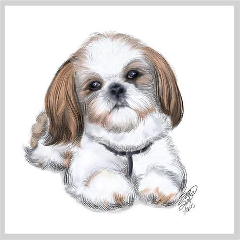 how to clip a shih tzu shih tzu puppies clip cliparts