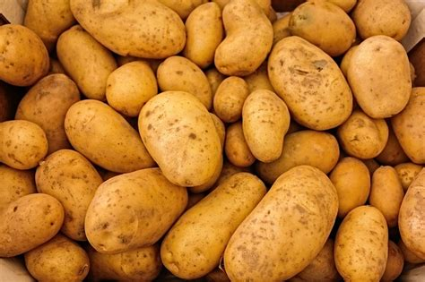Best Potato by What Are Some Of The Best Potato Varieties