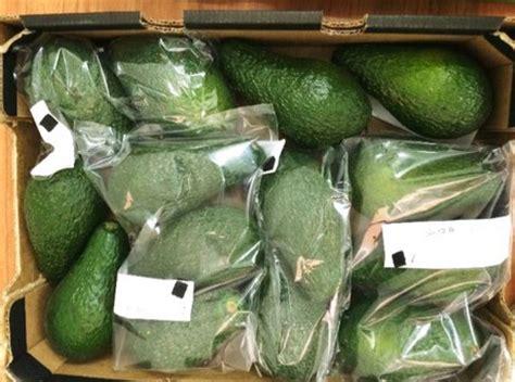 Shelf Of Avocado quot bags promise longer shelf for avocados quot
