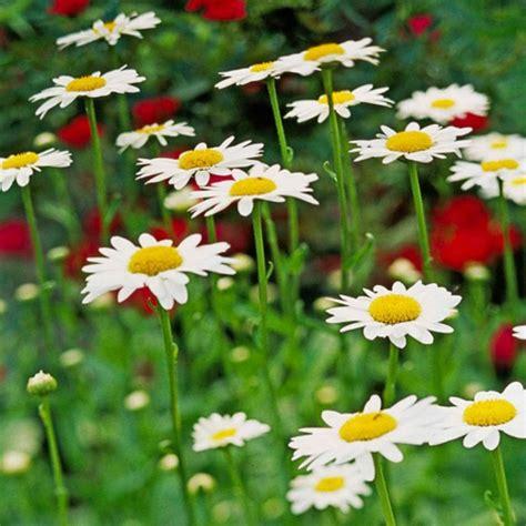 Die Schönsten Zimmerpflanzen 4396 by Die Sch 246 Nsten Wei 223 En Blumen F 252 R Ihren Garten