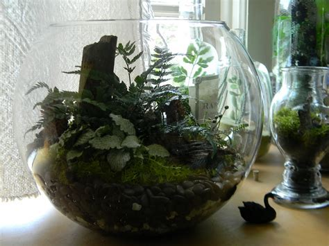 charming Light Decoration Ideas For Home #1: decoration-garden-beautiful-unusual-terrarium-containers-with-plant-white-and-green-with-a-black-swan-out-ideas-terrarium-containers-with-some-unique-plants-and-amazing-design-theme.JPG