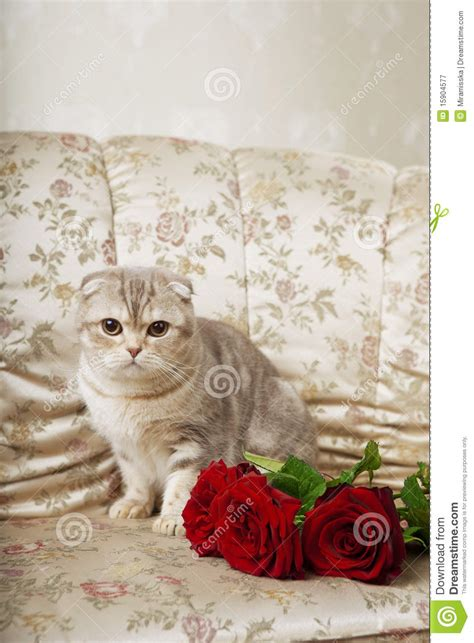 cat sitting on couch cat sitting on a beautiful vintage couch stock image