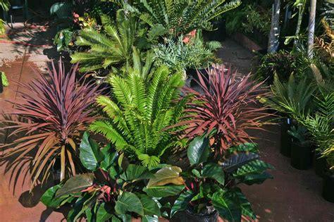 tropical garden plants full sun darxxidecom