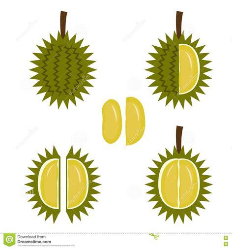 durian icon  flat style vector illustration