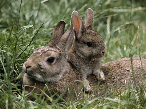 rabbit bunny bunny rabbits a a day