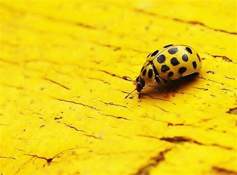 It S Yellow 30 vividly yellow photographs stockvault net