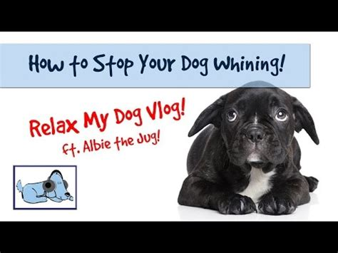 stop puppy whining stop a from barking separation anxiety the effects of remote collar correction