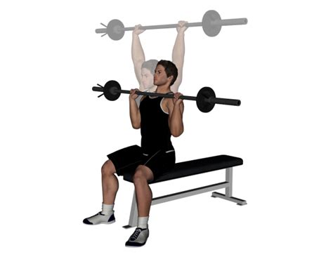 seated barbell press pin exercise barbell front trips raise middot chart on