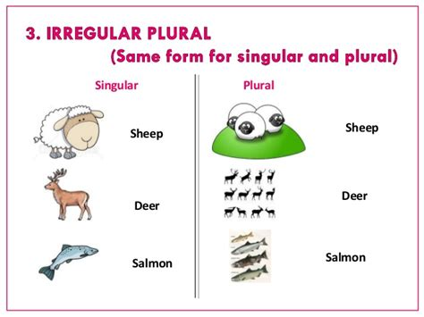 What Is The Plural Of Shelf by Nb1 Singular And Plural