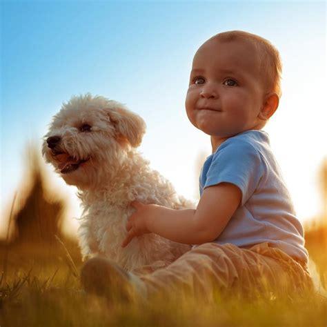 fotos de pitos de nios medianos 191 por qu 233 los perros cuidan a los beb 233 s