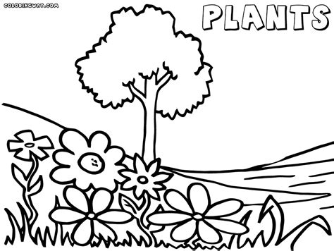 water plants coloring pages coloring pages