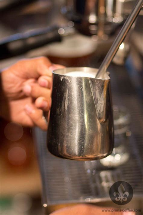 espresso and milk for beginners prima coffee