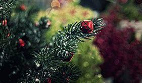 about us christmas tree world wigan manchester uk