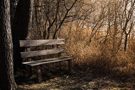 bench in nature free photo bench bank seat nature out free image on