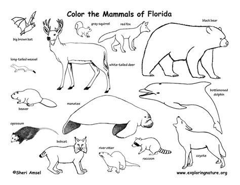Florida Panther Coloring Page Az Coloring Pages Florida Coloring Pages