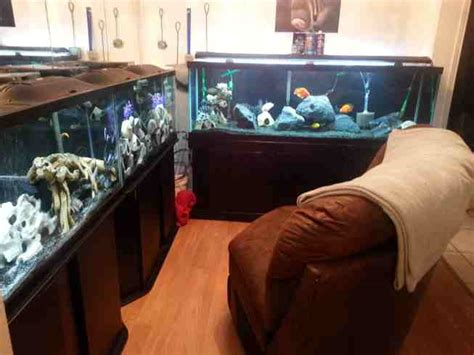 room fish aguirre fish room tropical fish site