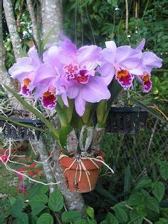 496 Best Images About Potted Orchids On 496 Best Images About Potted Orchids On