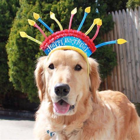 golden retriever happy birthday images 661 best quot happy birthday quot doggie images on
