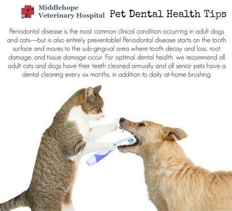 7 Health Conditions That Hit Dogs by 18 Best Images About Dental Health Month On