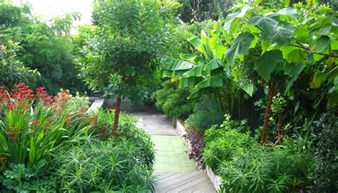 subtropical garden ideas sub tropical garden sommers gardens