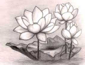 How To Draw Lotus Flowers 35 Beautiful Flower Drawings And Realistic Color Pencil
