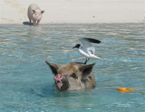 where can i take my swimming near me hardbergers back from bahamas here there