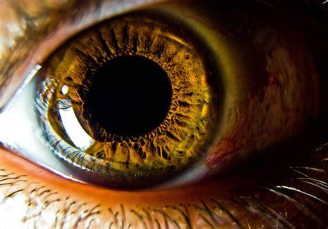 imagenes de ojos zoom el iris la parte de los ojos que no conoces y te hace