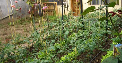 backyard gardens illegal it s not fiction nearly 100 million americans live with