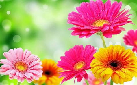 spring florals spring flowers fotolip com rich image and wallpaper
