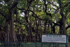 Botanical Garden Kolkata Acharya Jagadish Chandra Bose Indian Botanic Garden Near Kolkata Clicking Photos On The Go