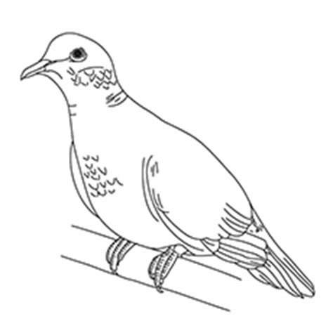 turtle dove coloring page turtle doves peace dove coloring pages coloring pages