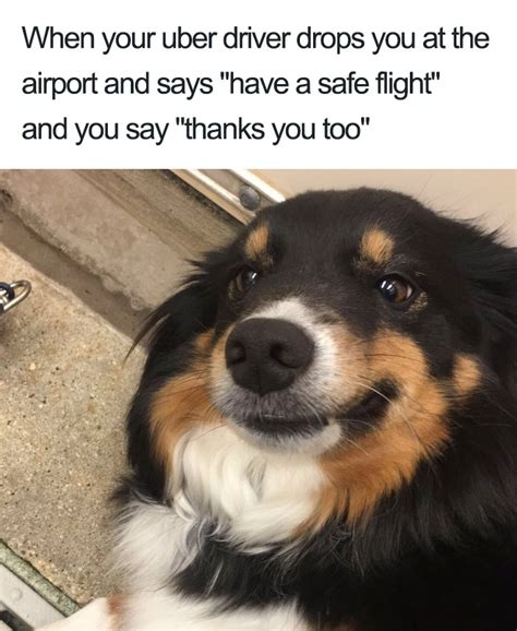 animal memes 20 hilarious uber animal memes bored panda