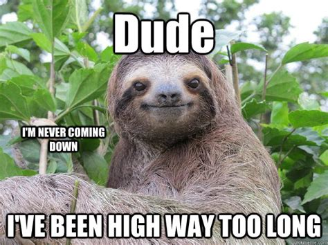 Dragon Sloth Meme - the gallery for gt dirty sloth dragon