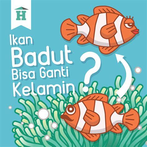 Squishy Ikan gambar ikan kartun berwarna gambar gokil