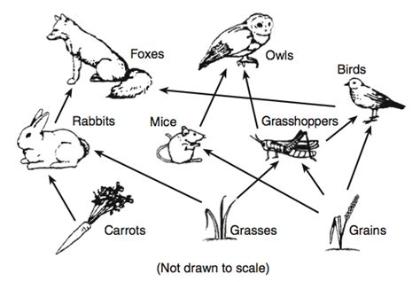 easy food web to draw science quiz part 1 proprofs quiz
